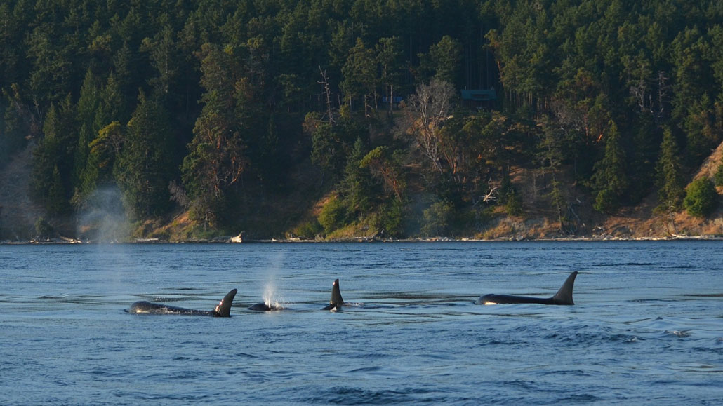 orca y ética